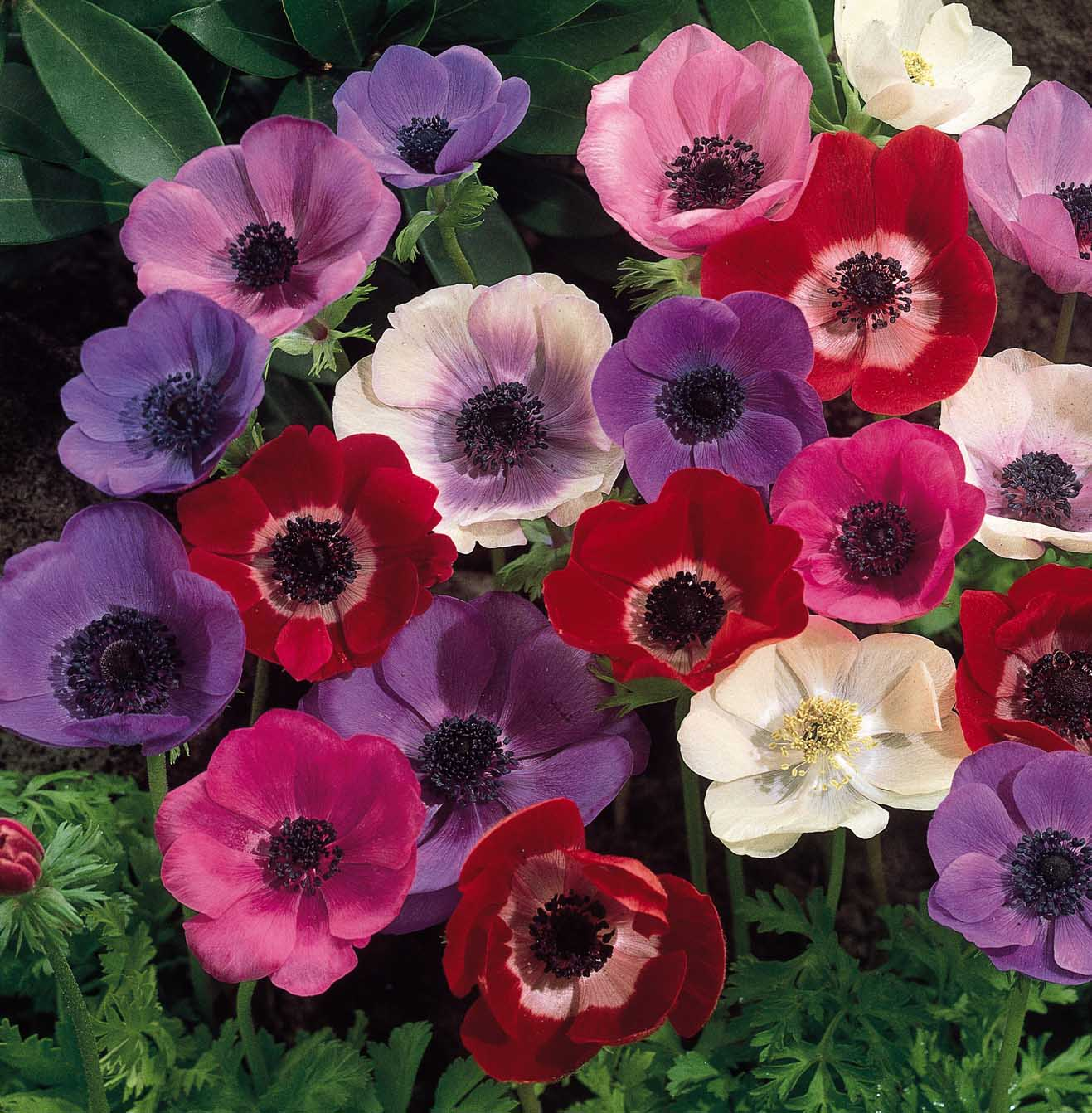 3d Wallpapers Hd Flowers Wallpapers Free Download