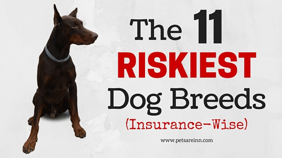 Risky Dog Breed