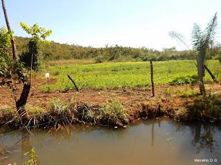 Área de preservação permanente degradada e impedida de reflorestar com frutíferas.