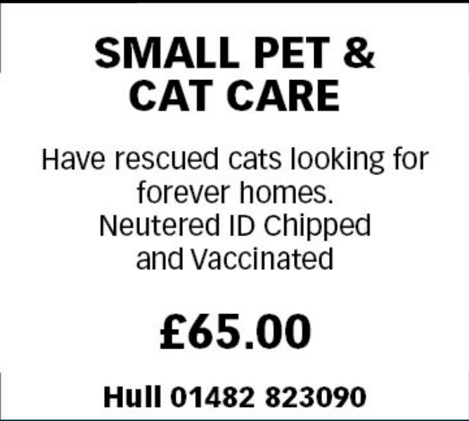 Small Pet and Cat Care