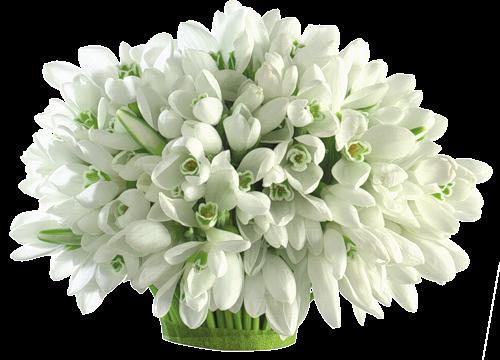 Znalezione obrazy dla zapytania kwiaty, bez tła