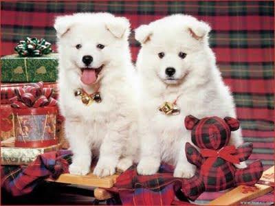 wallpaper cute dogs. Cute Dogs