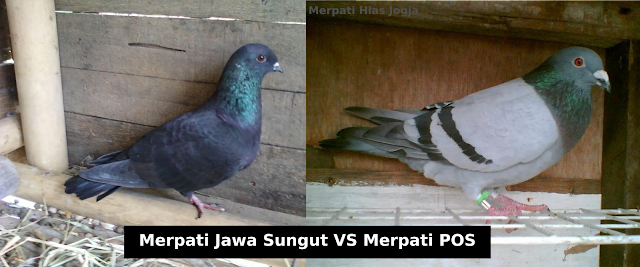 http://merpati-hias-jogja.blogspot.com/