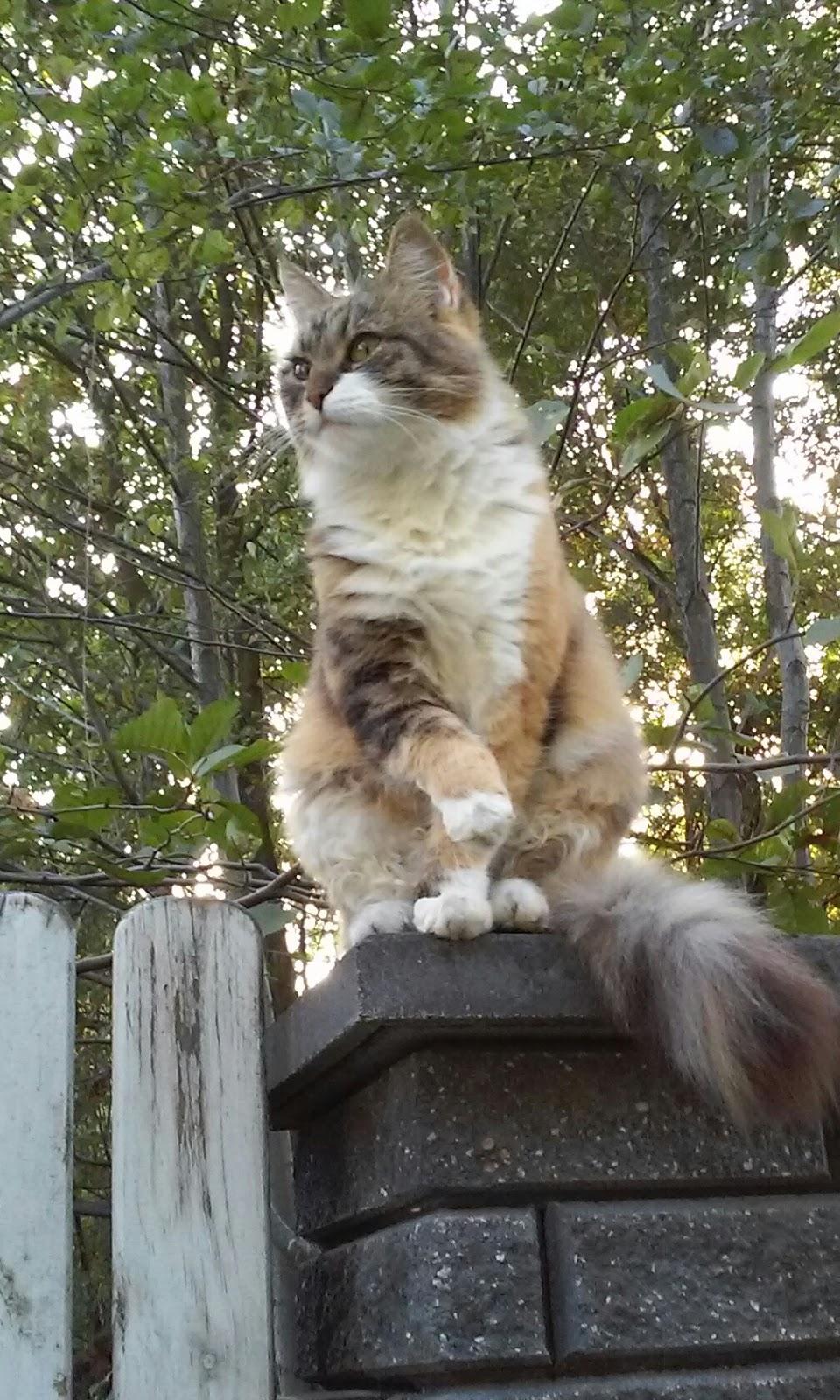 Mojo- była kotem z charakterem wojownika
