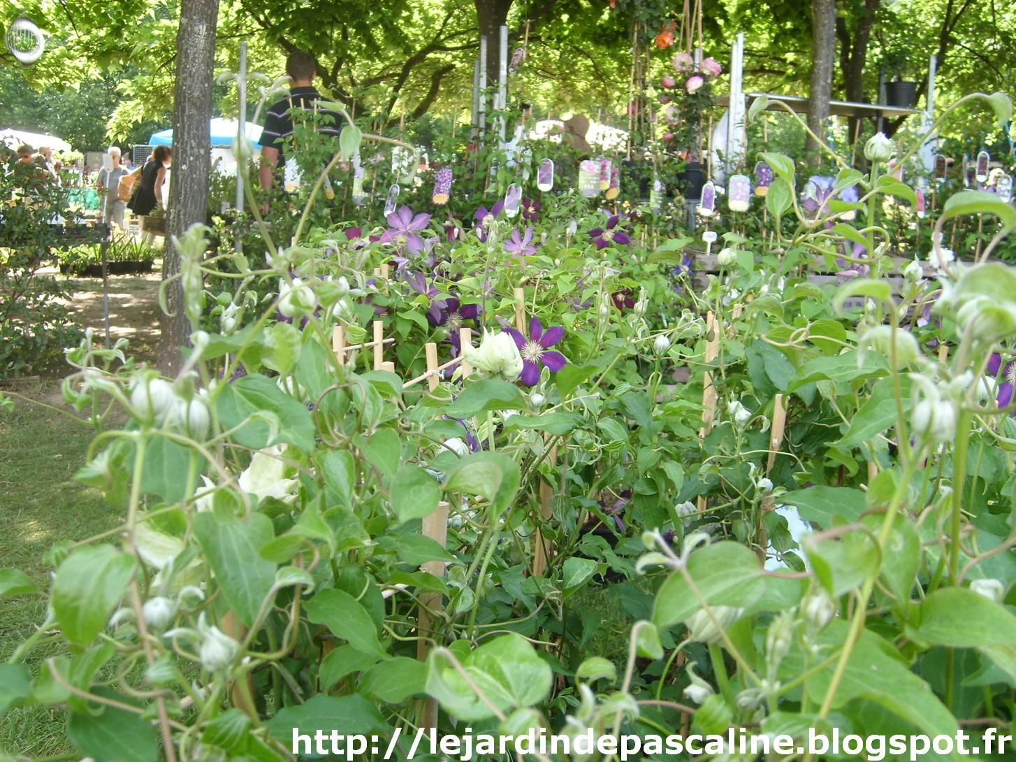 Le jardin de pascaline mon coup de coeur aux jardins d for Jardin aux plantes