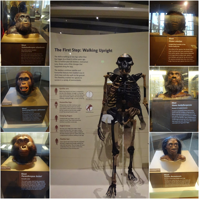 The faces of Apes at National History Museum in Washington DC, USA