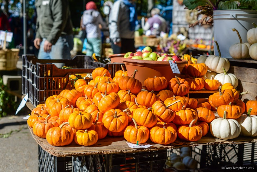 Portland, Maine USA October 2015 little pumpkins at the farmers market in Deering Oaks Park. Photo by Corey Templeton.