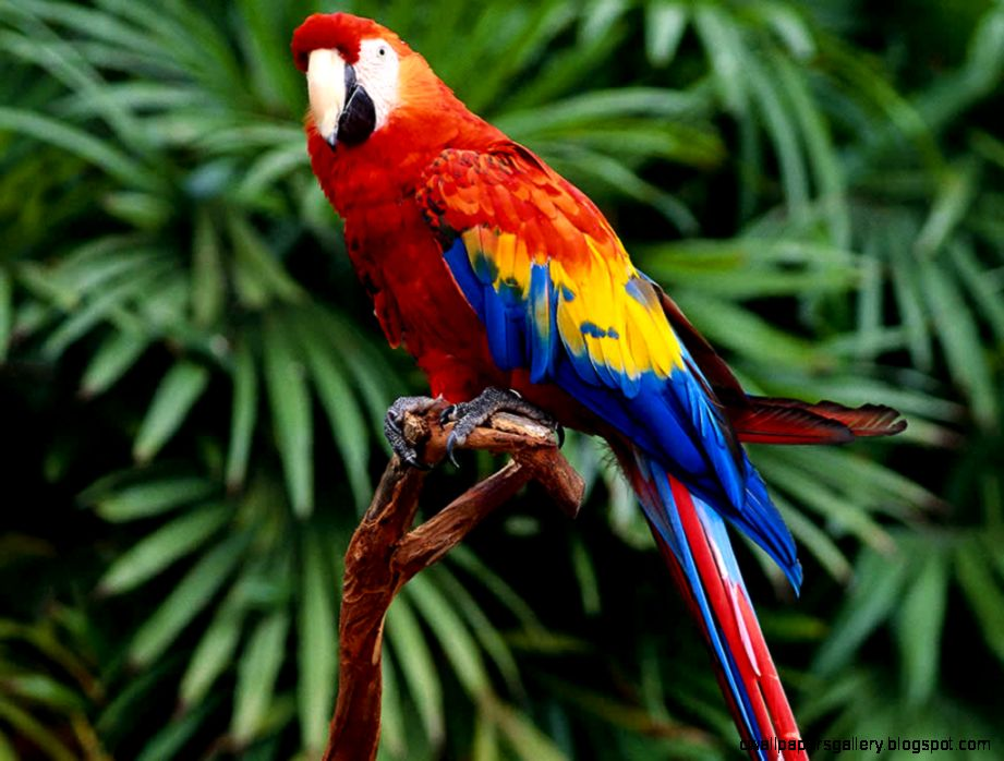 Tropical Rainforest Biome Animals | Wallpapers Gallery