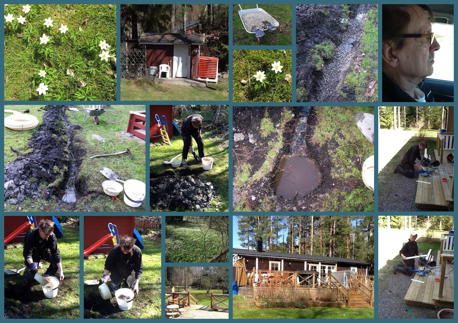 Inredning dräneringsrör : Mortens blogg: Vitsippor och vi gräver ner dräneringsrör i Vemlinge