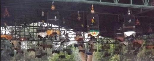 Cara Merawat Burung Love Bird Agar Cepat Gacor Dan Penyetelan Untuk Di Lombakan.