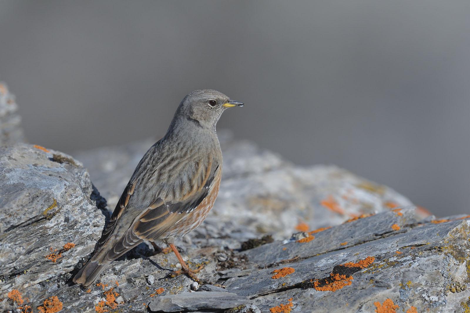 jardin de la sauvagine les oiseaux de montagne en valais