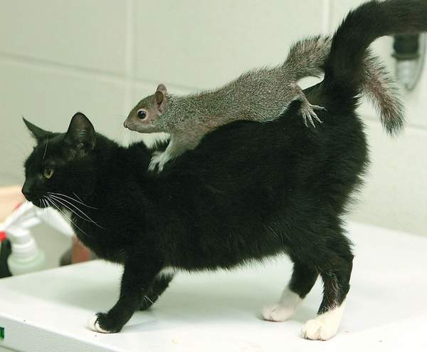 Squirrel Riding