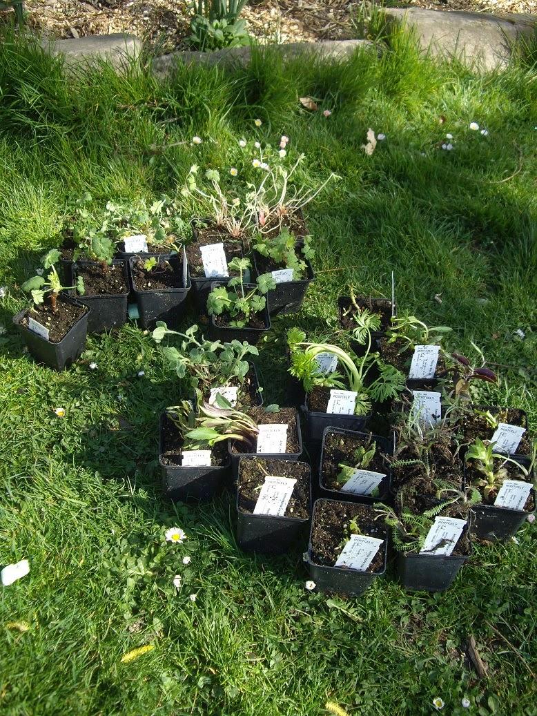 Derri re les murs de mon jardin le premier cadeau du printemps - Derriere les murs de mon jardin ...