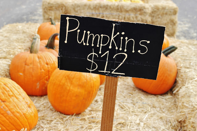 pumpkin, pumpkins, pumpkin patch, fall, exchange student, exchange student life, new experiences, exchange student in usa, america, united states of america, usa, finnish girl, finnish, from finland, Explorius, Explorius Finland, Explorius suomi, cetusa, california