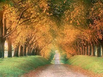 O meu caminho