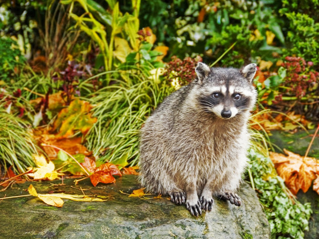 Autumn Animal Images3