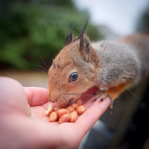 wildlife photography feeding animals konsta  punkka-9