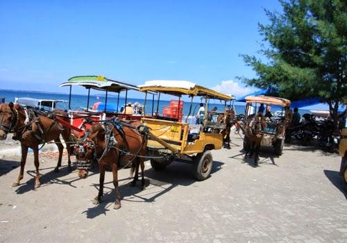 Kendaraan Cidomo Khas Lombok
