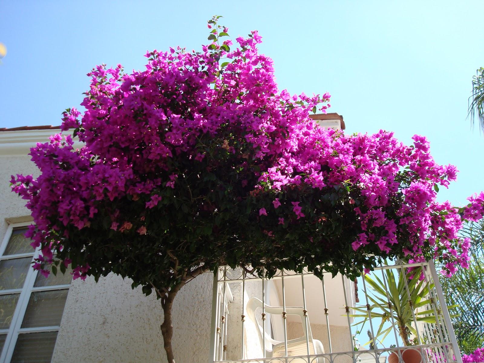 Sancarlosfortin plantas y flores en el balcon - Plantas de balcon ...