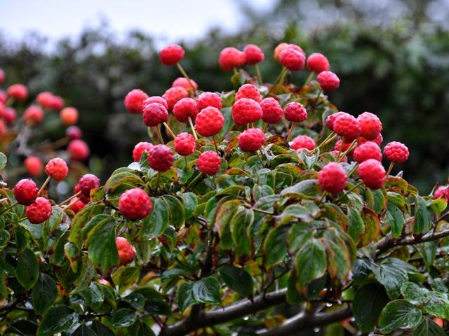 Dyrk din have: små træer til små haver