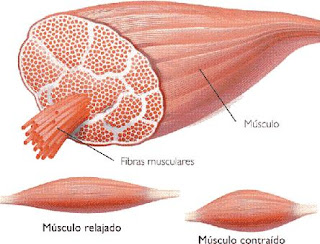 musculo,cpk,hemocromatosis,ferritina elevada