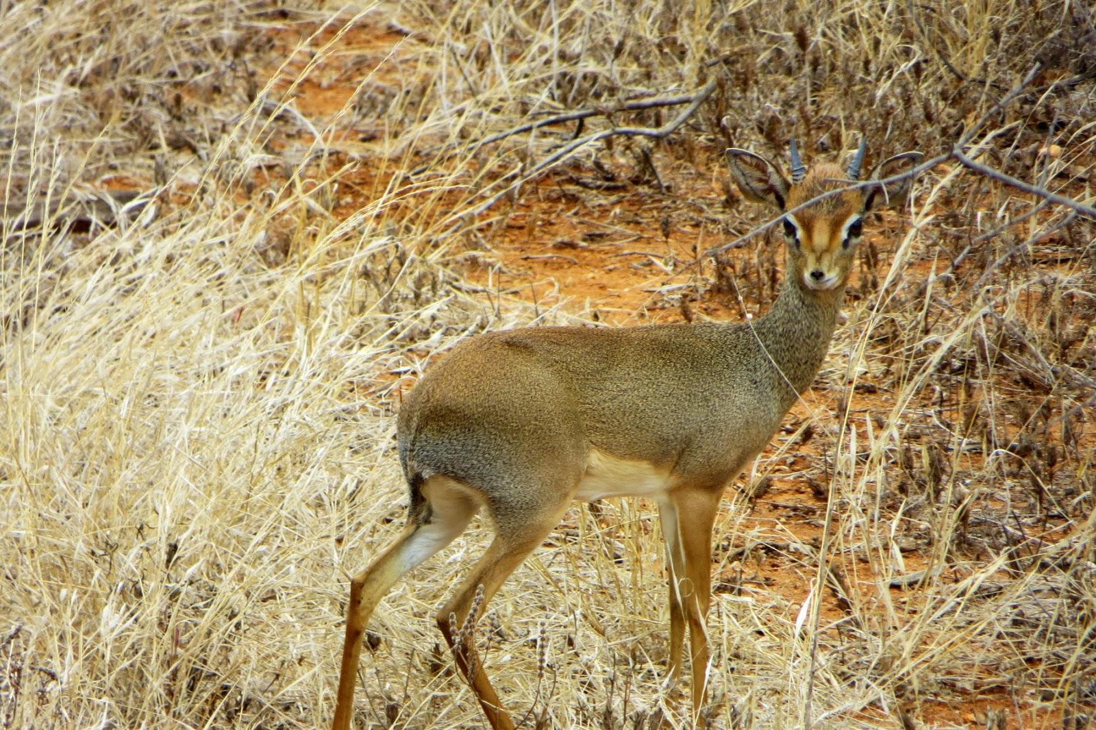 safari in kenya di quattro giorni