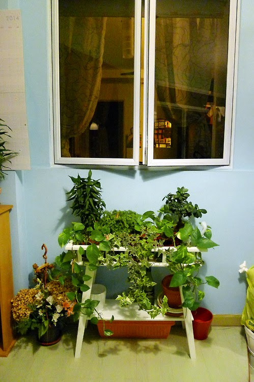 HDB DIY vertical vegetable garden thats alot of Vs