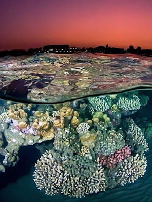 After the Sunset at the Red Sea Reef_coral