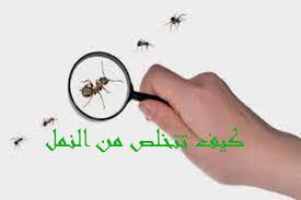شركة-مكافحة-النمل الابيض-بالخبر