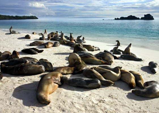 Kepulauan Galapagos masih   menjadi tempat  yang murni. Kepulauan ini merupakan rumah bagi  kura-kura  raksasa,  iguana, singa laut, pinguin, ikan paus dan ikan