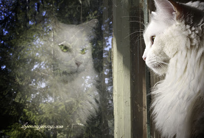 white cat reflection in window