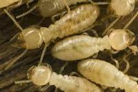 termite treatment company