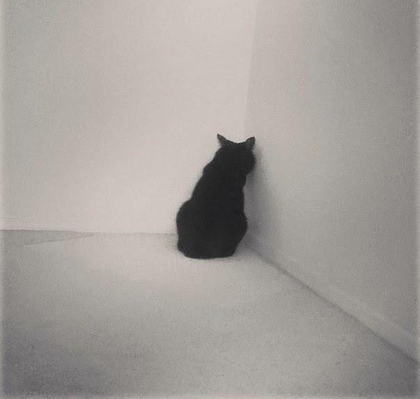 Коты случаются 07