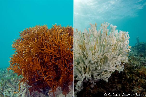 Обесцвеченный коралловый риф
