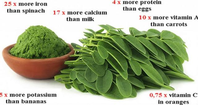 AJAIB!!! Daun Ini Bisa Obati 4 Jenis Kanker Sekaligus!! Jangan remehkan daun ini!