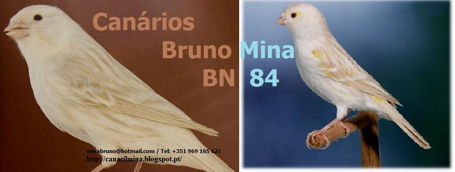 Canários Bruno Mina