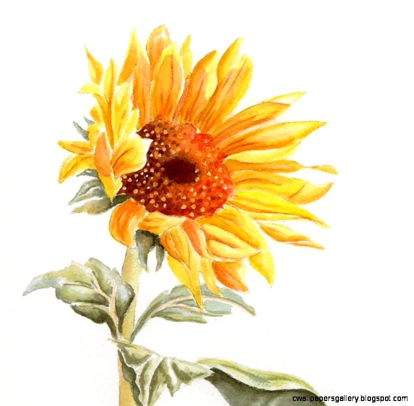 1000 images about Sunflower Gods Love on Pinterest  Sunflowers