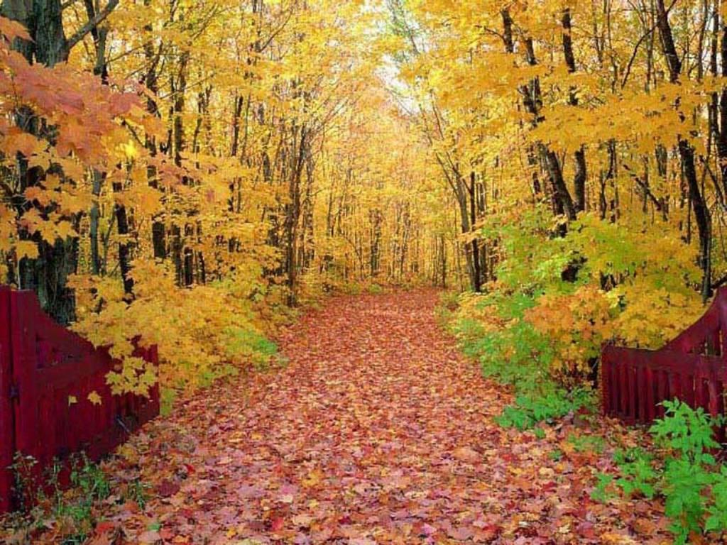 autumn season wallpapers hd - photo #12