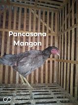 INDUK PANCASONA
