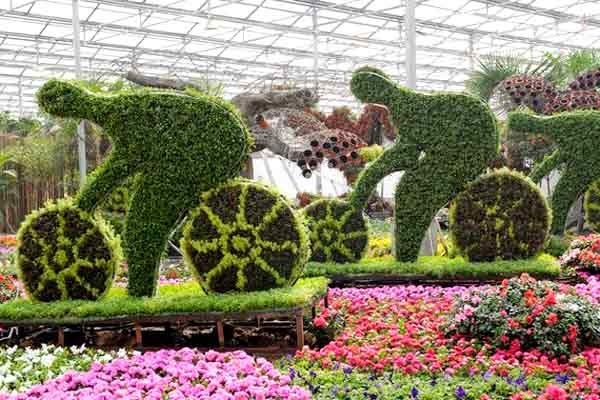 Feast eyes on flowers at Qingzhou trade fair