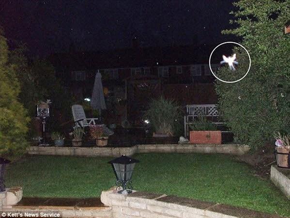 Trang Daily Mail ngày 8 tháng 9 năm 2009 đưa tin, cô Phyllis Bacon 53 tuổi người Anh nhân một lần dạo chơi xung quanh khu vườn nhà tiện tay chụp lại nhiều bức ảnh.