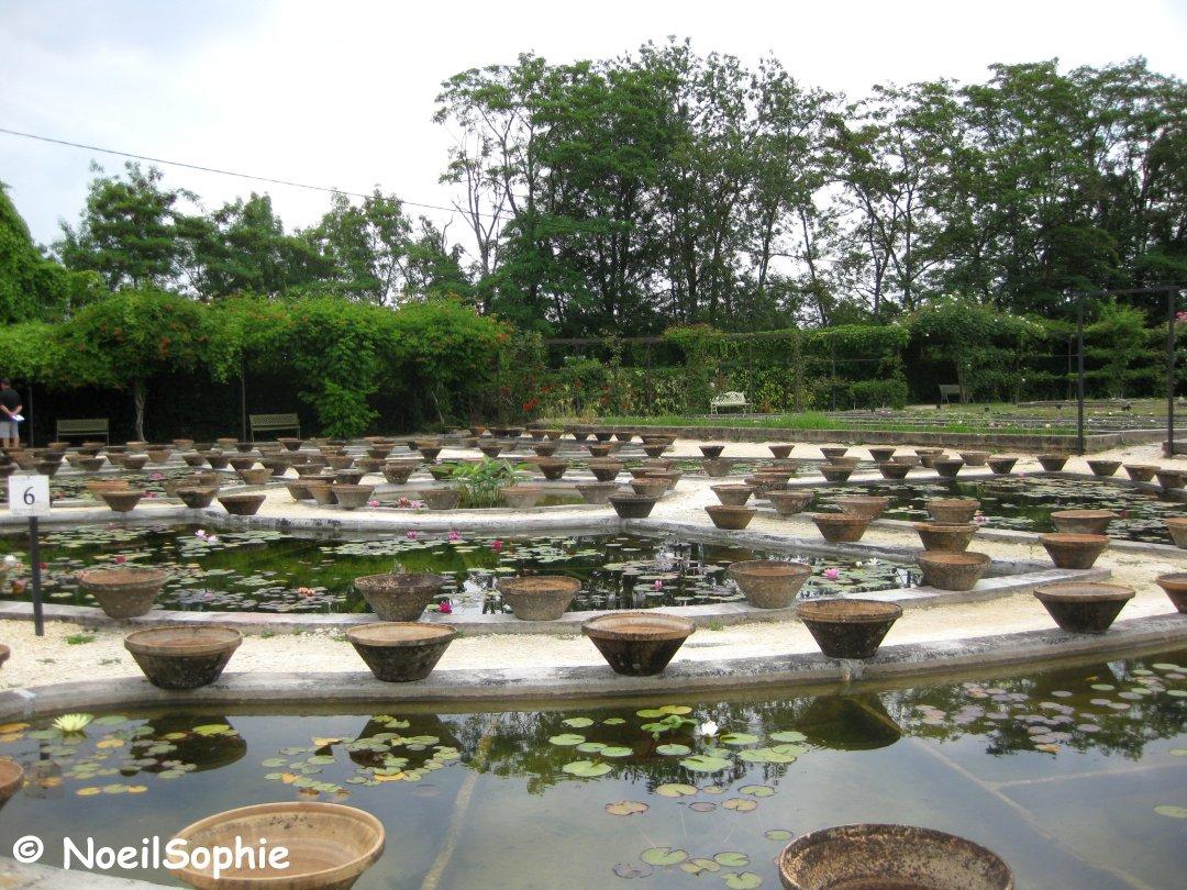 Le n 39 oeil de sophie rencontre au pays des n nuphars - Jardin des nenuphars le temple sur lot ...