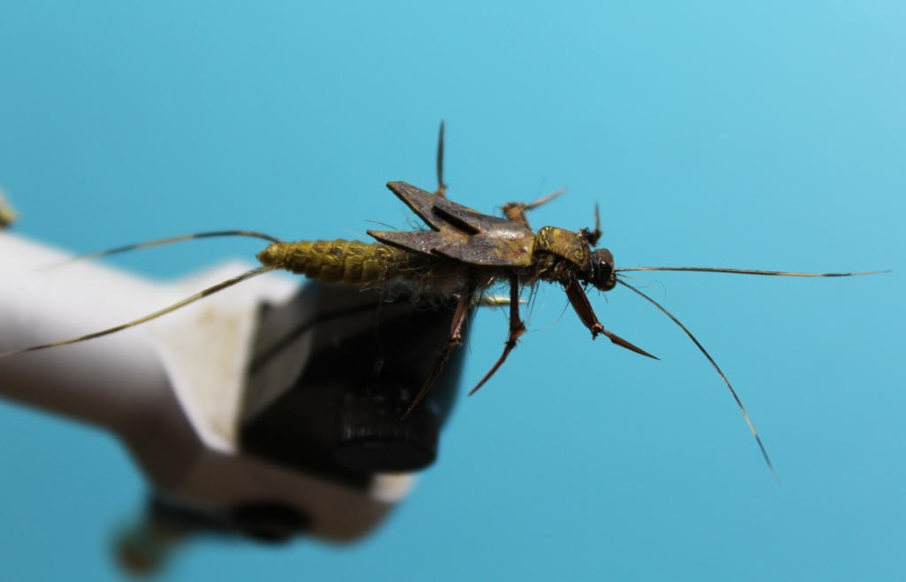 Stonefly nymph in water