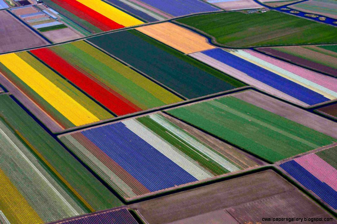 Tulip Fields Related Keywords  Suggestions   Tulip Fields Long