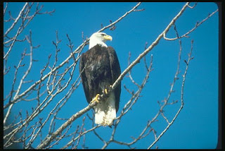eagle-αετός-ηθικό δίδαγμα-ιστορία ζωής
