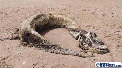 Bangkai Makhluk Aneh Di Pantai