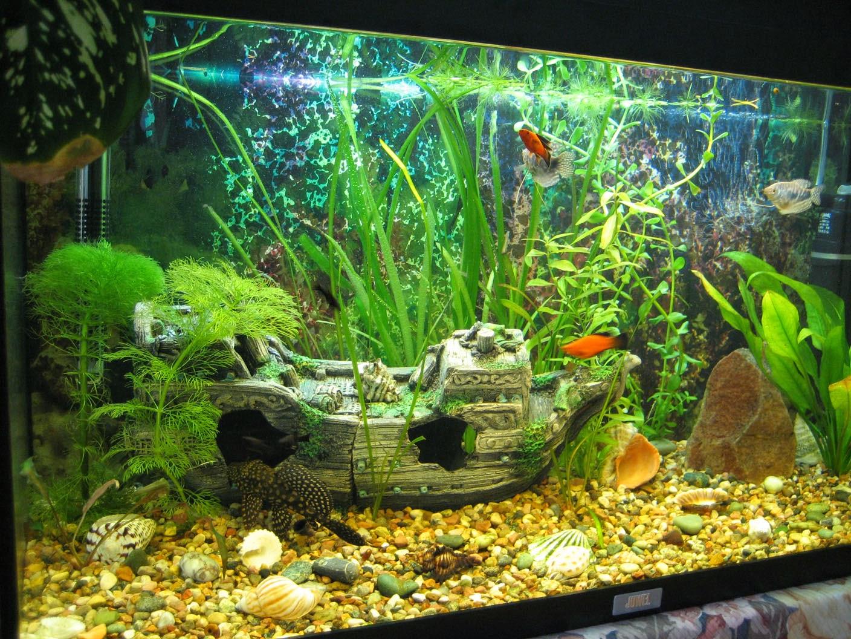 Картинка аквариум своими руками фото 465