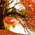 Sonbahar Üzerine - Eylül'dü - Cemal Süreya