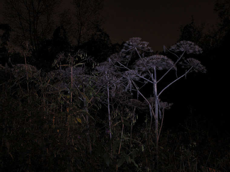 NIGHT - LAND