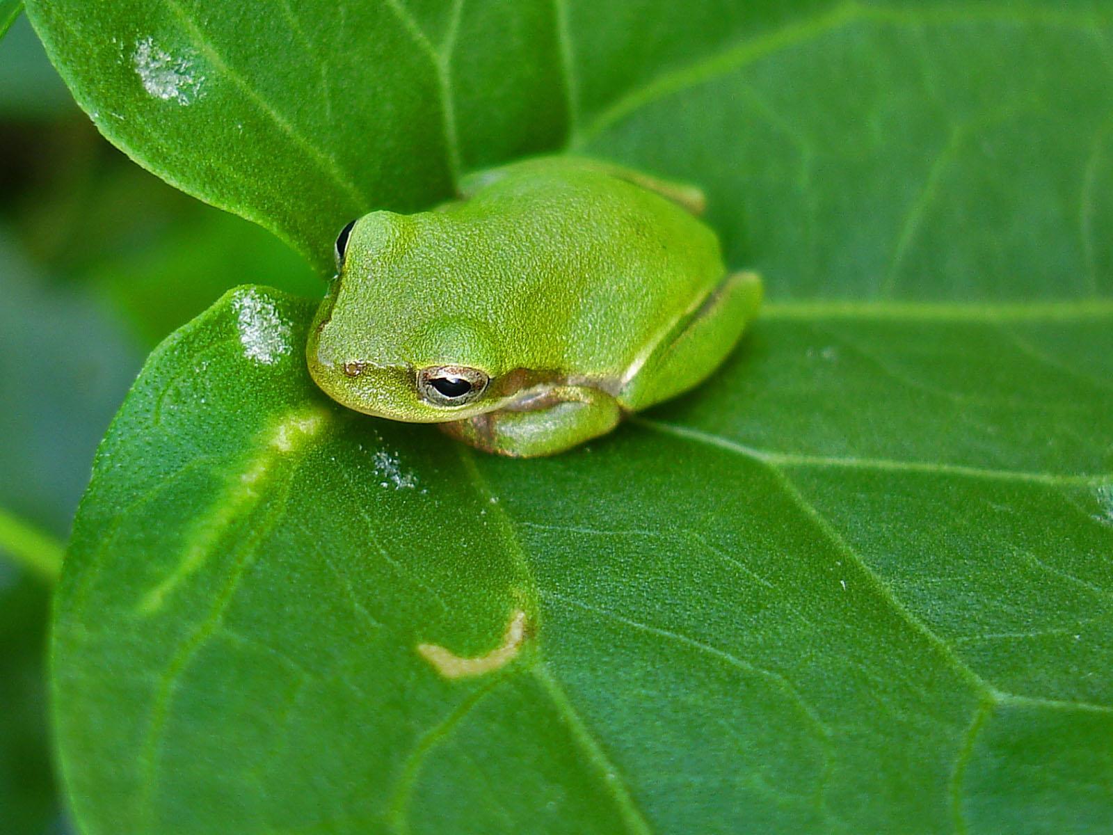 nature wallpaper backgrounds frog wallpaper